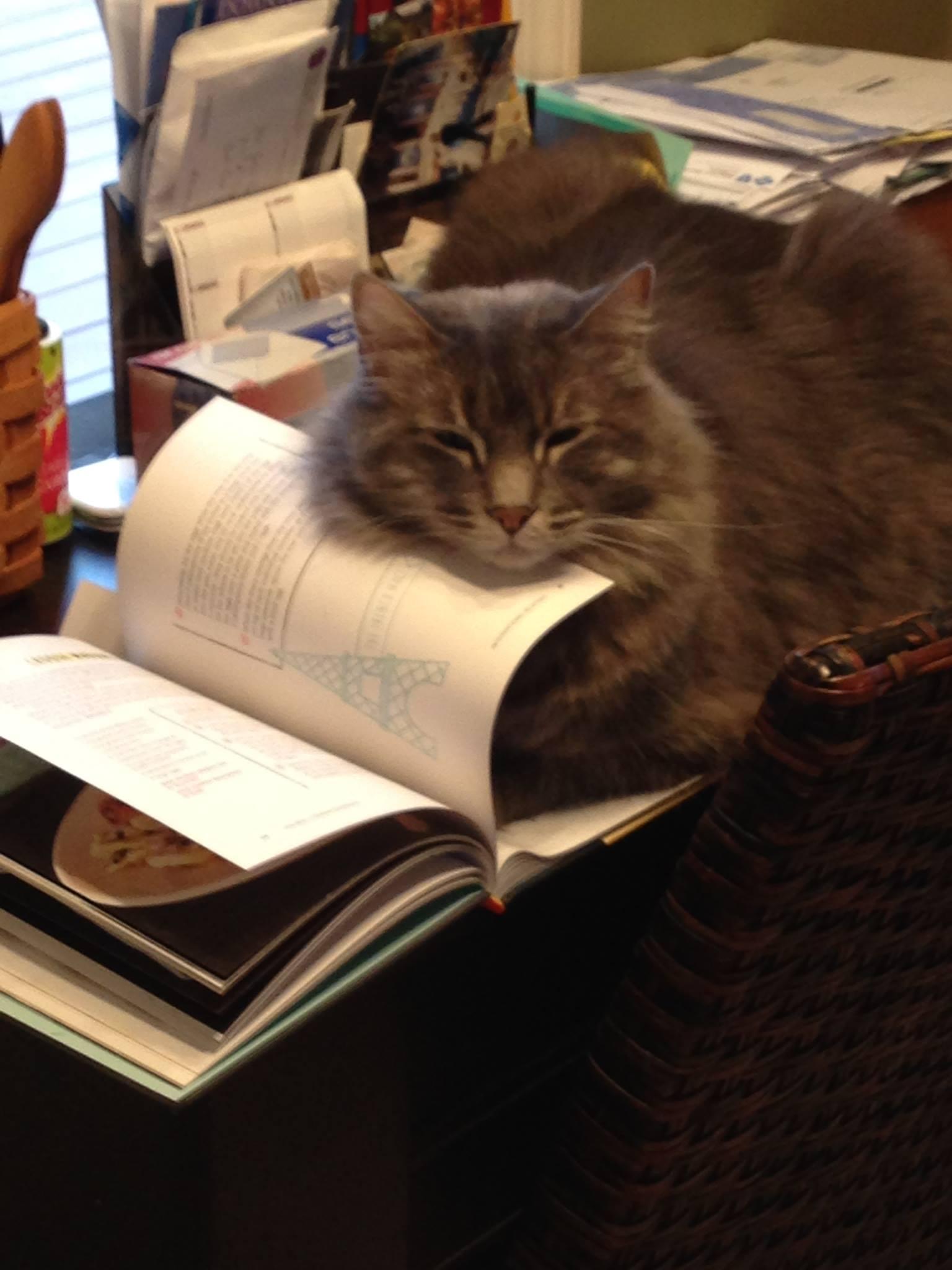cat cookbook