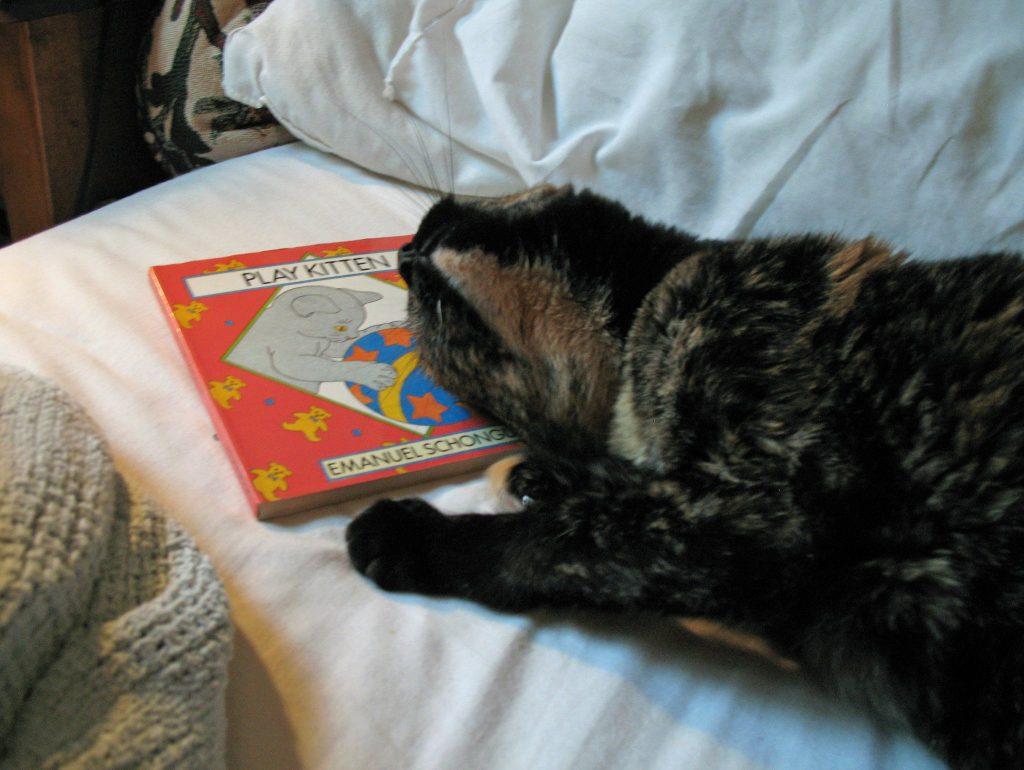 guadalupe cat cuddling book