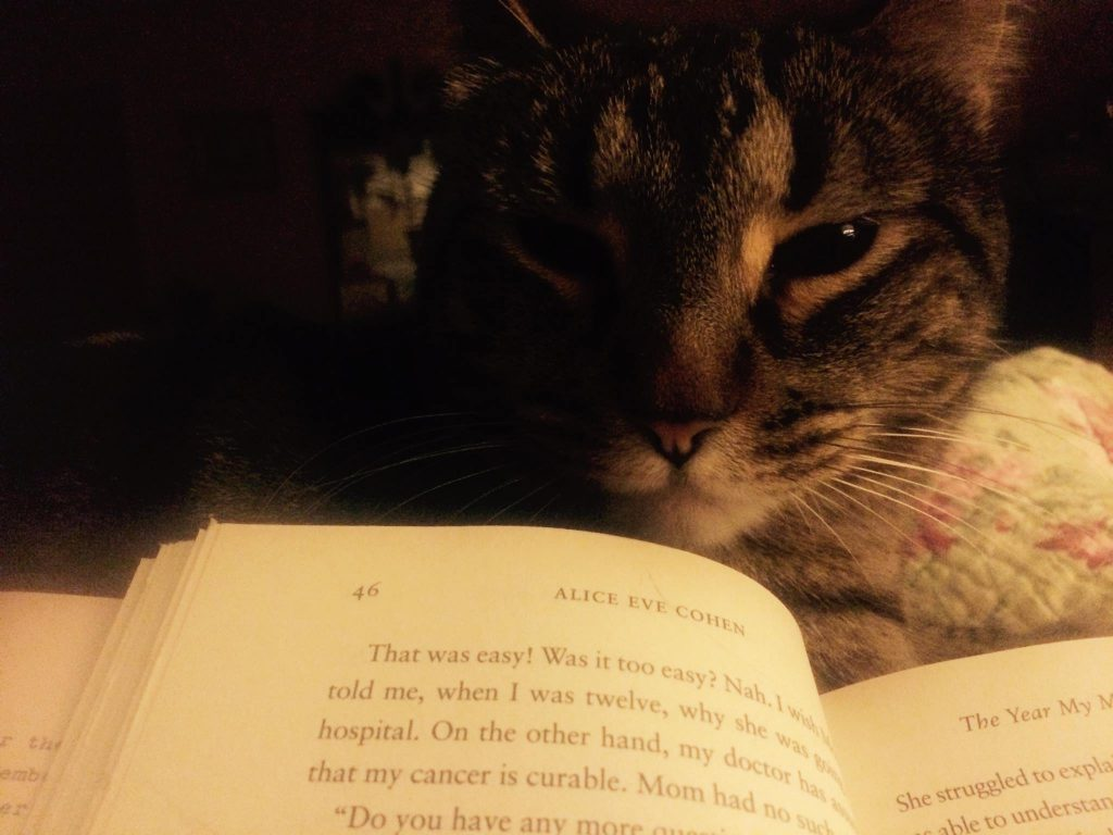 cute cat reading