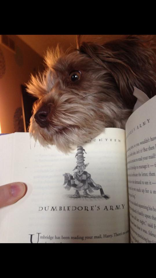 baxter dog book