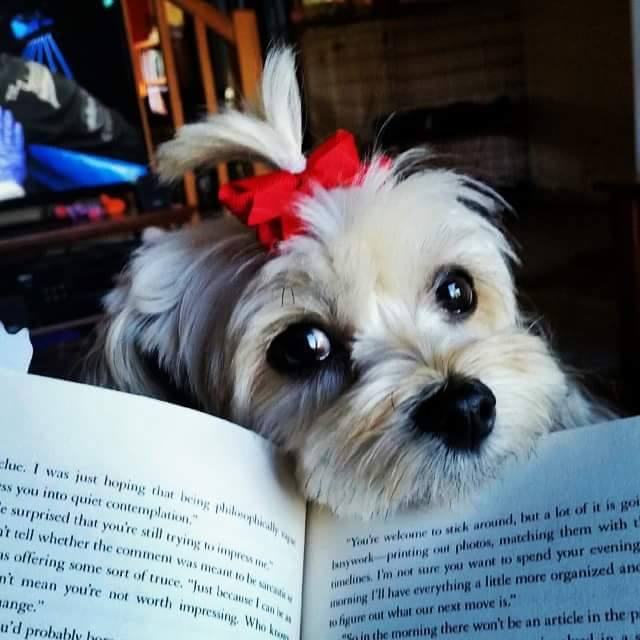 Natasha-dog-reading-1