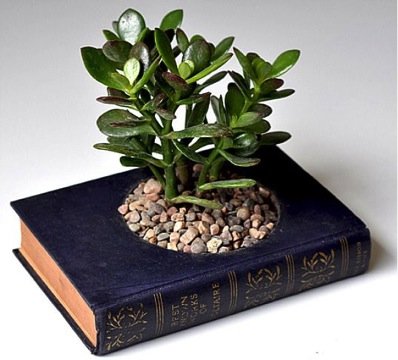 books and plants diy