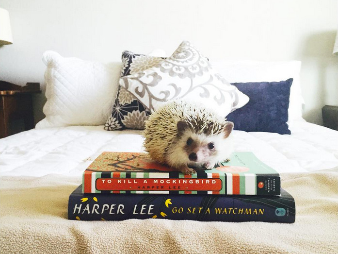 best literary Instagram accounts