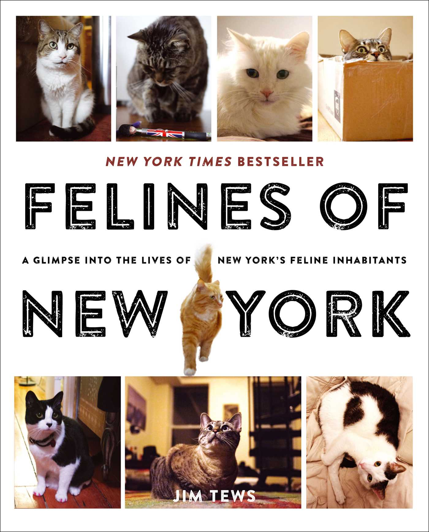 Felines of New York by Jim Tews
