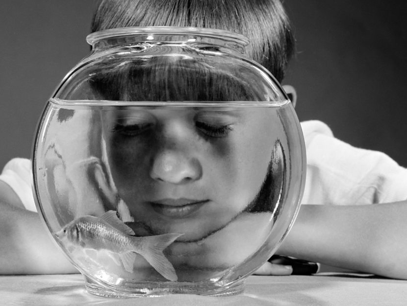 A boy and a fishbowl